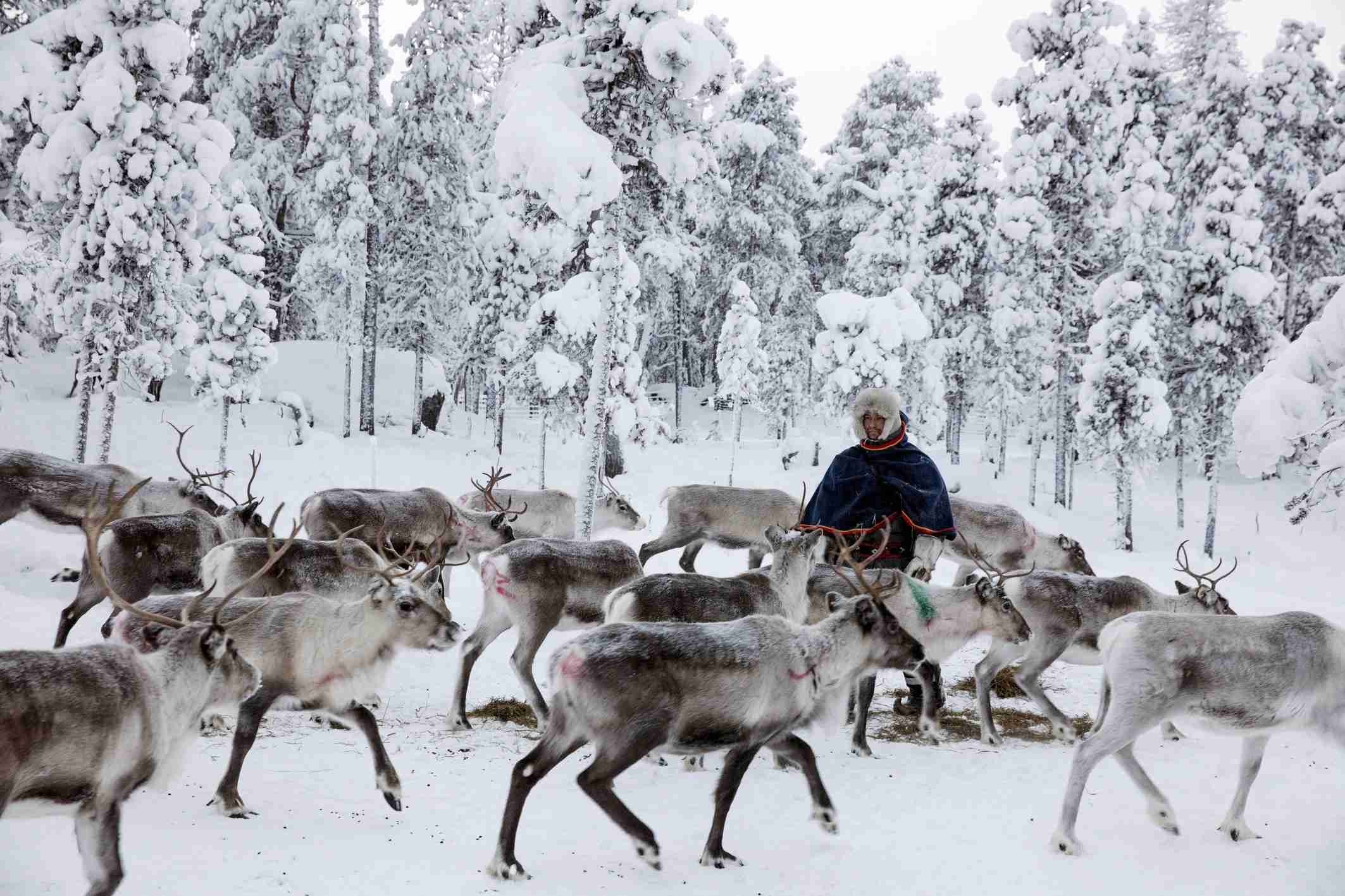 The Sami of Finland: Surviving the Extreme North