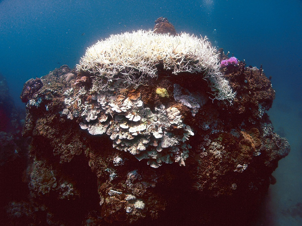 Coral Restoration in Taiwan