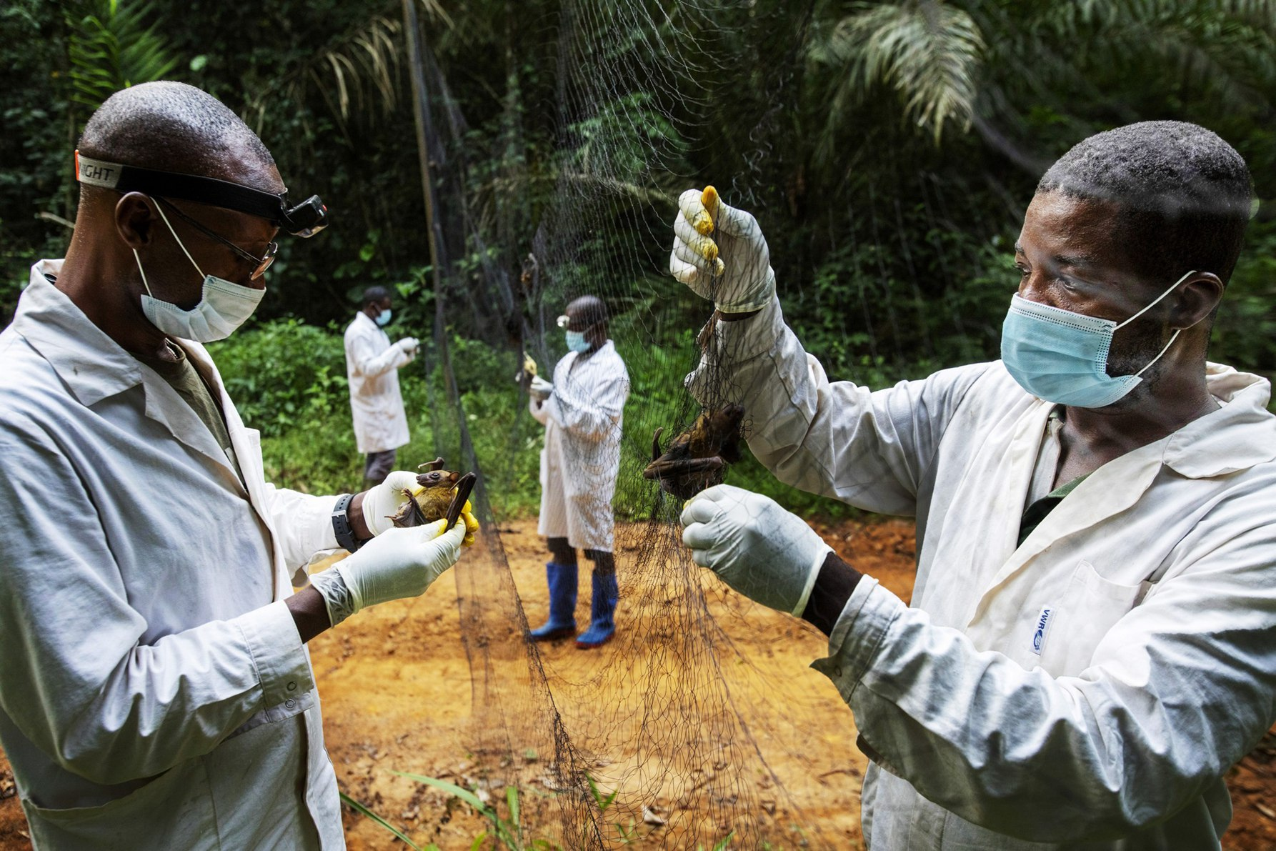 Virus of the Future: On the African Trail