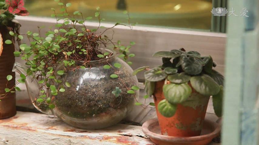 Aromatic Plants to Ward Off the New Coronavirus